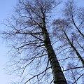 #chwaszczyno #kawle #zachód #drzewa #las #droga #bajorko #bajoro #jezioro