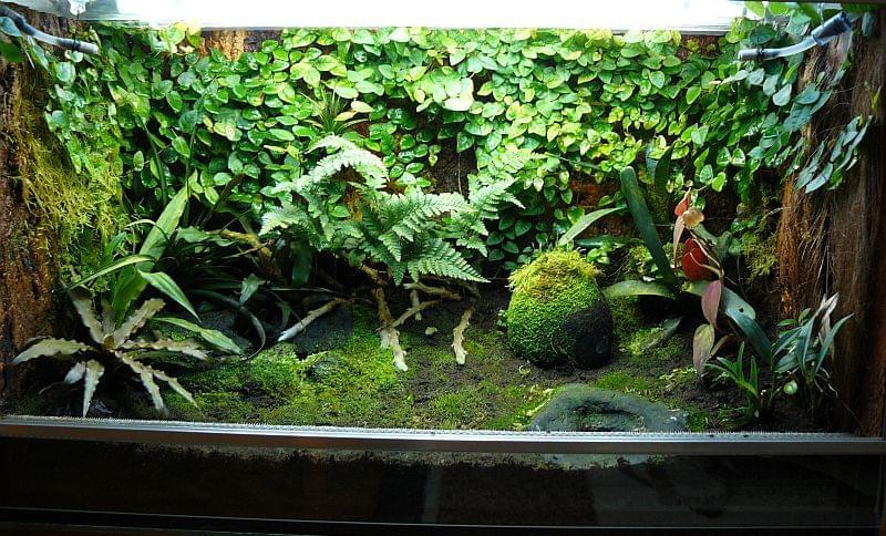 El rincon de molius dendrobates leucomelas for Habitat decoracion