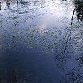 #blask #jeziorko #jezioro #przyroda #trawa #woda #OdbicieWWodzie