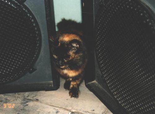 Esmeralda - kot muzyczny