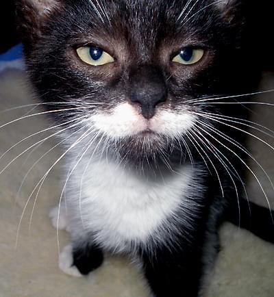 Wąsy małego Morfeusza - foto: moja córka