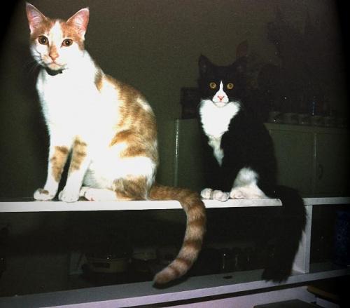 Semi i Maksio - oba małe