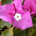 #kwiat #piękny #piękne #makro #natura #przyroda