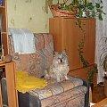 To zdjęcie zostało zrobione w całkiem zgaszonym świetle w pokoju, przy najsilniejszym błysku aparatu. #pies #piesek #pieseczek #piesio #zwierzęta #kudłaty #pikuś