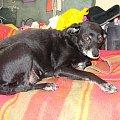 Mój pies Beja. #pies #piesek #pieseczek #piesio #zwierzęta #beja #bejka #mój