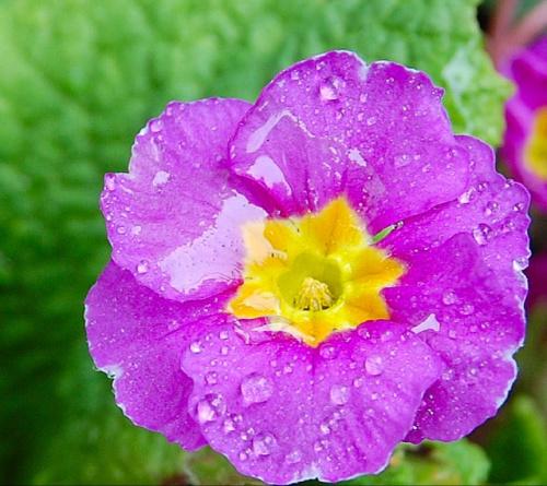 Jaka wiosna takie kwiaty:(( -zimno i deszcz- temu to zawsze dobrze :)) zawsze Fit!!:))