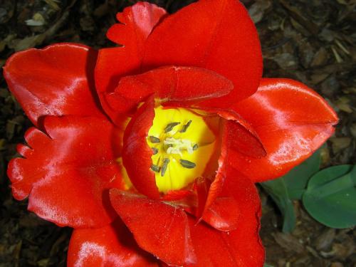 #kwiat #kwiatek #czerwień #CzerwonyKwiat #CzerwonyKwiatek #OgródBotaniczny #botanika #ogród #Powsin #KwiatWPowsinie #OgródWPowsinie #OgródBotanicznyWPowsinie #OgródWParkuWPowsinie #ŁadnyKwiat #WyraźnaCzerwień #czerwony #KolorCzerwony
