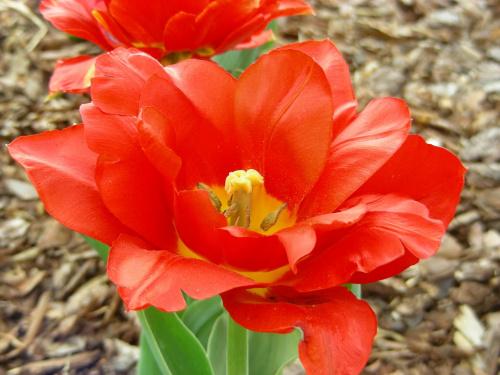 #kwiat #kwiatek #CzerwonyKwiat #CzerwonyKwiatek #ŁadnyKwiat #ŁadnyKwiatek #OgródBotanicznyPowsin #ogród #botanika #Powsin #OgródBotaniczny #KwiatWOgrodzie #KwiatekWOgrodzie #CzerwonyKwiatWOgrodzie #CzerwonyKwiatekWOgrodzie #czerwień #czerwo