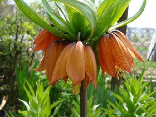 Roślinki prosto z ogródka #rośliny #ogród #kwiaty #kwiatki #kwiatuszki