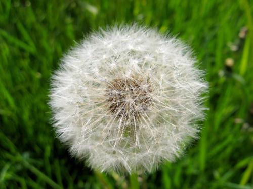 11 Maja ... #kwiatki #wiosna #trawa #natura