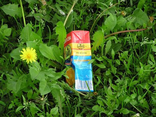 W ogrodzie #trawa #przyroda #napój #ogród