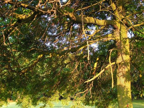 Zachod slonca w drzewie #ZachódSłońca #promienie #słońce #drzewa #drzewo