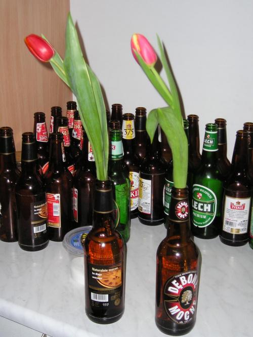 Tulipany tez potrafia pic #tulipan #tulipany #piwo #butelki