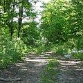 #las #drzewa #ścieżka