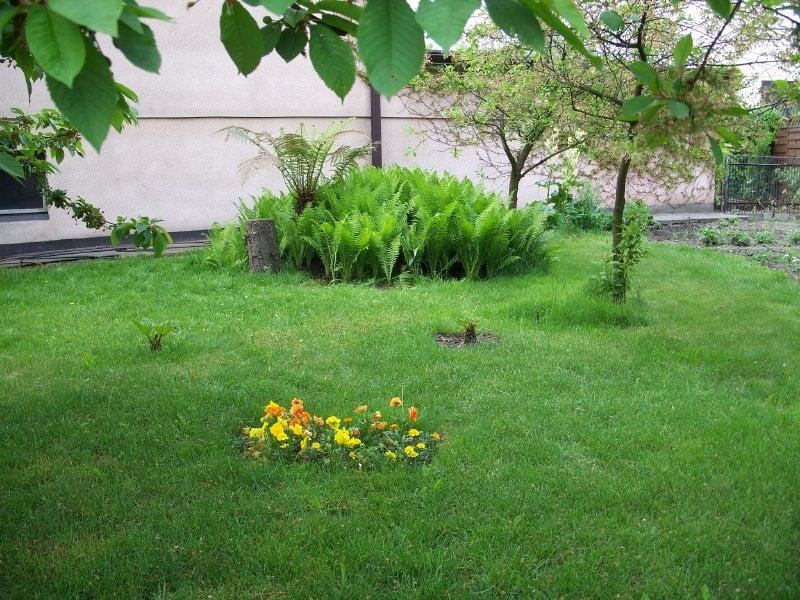 Paprocie do ogrodu