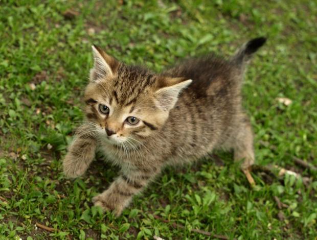 Maciek - mały Żbik #kot #kocurek #koty #Maciek