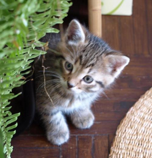 #kot #kocurek #koty