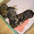 Moje trzy psiaki #szczeniaki #pieski #Tufi #Buba #Zuzia #pudełko #pieseczki
