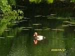 http://images33.fotosik.pl/267/a2a85c83abc495cbm.jpg