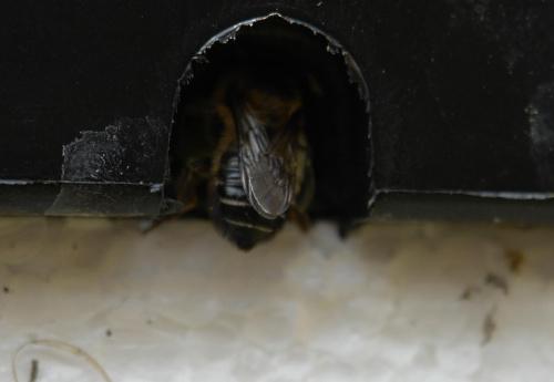 Tajemnicza pszczola