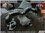 http://images33.fotosik.pl/283/73d8aaea5742b7b3m.jpg