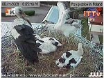 http://images33.fotosik.pl/286/3dadc91fe70526bbm.jpg