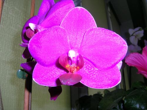 storczyk #kwiat #storczyk