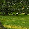 padłeś - powstań #drzewo #gałęzie #park