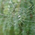 #pajęczyny #KropleRosy