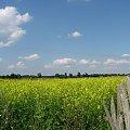 Wieś Stypułów latem. #przyroda #krajobraz #wieś #lato #łąka #niebo #żółty