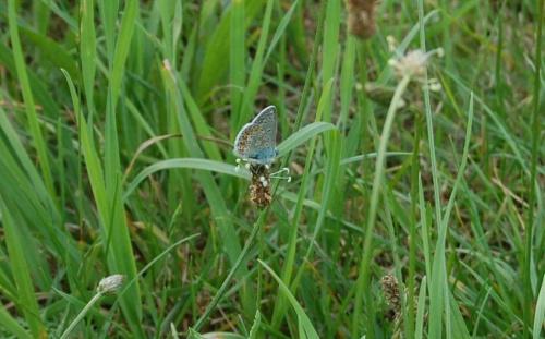 Motylek niezapominajkowy ;)