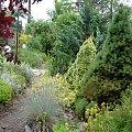 fragm.ogrodu #ogród #krzewy #ścieżka