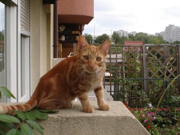 #kot #koty