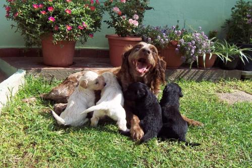 Szczęśliwa rodzinka,,, szkoda tylko że ojciec się nie pokazuje :)
