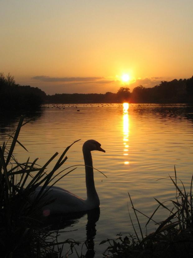 #zalew #natura #zachód #wieczór #spacer
