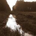 kanał Łasica ku cłońcu #Puszcza #jesień