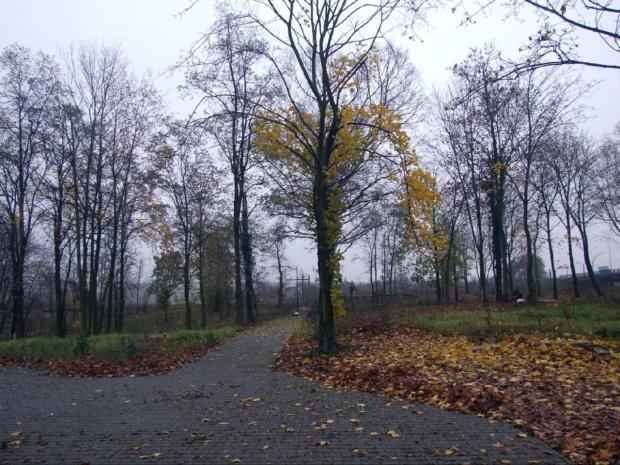 Cmentarz szpitala Dziekanka Gniezno