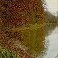 No i w pionie #jesień #ptaki #czapla #woda