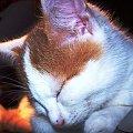 Śpiący kociaczek #koty #sen #pupile #zwierzaki #kot