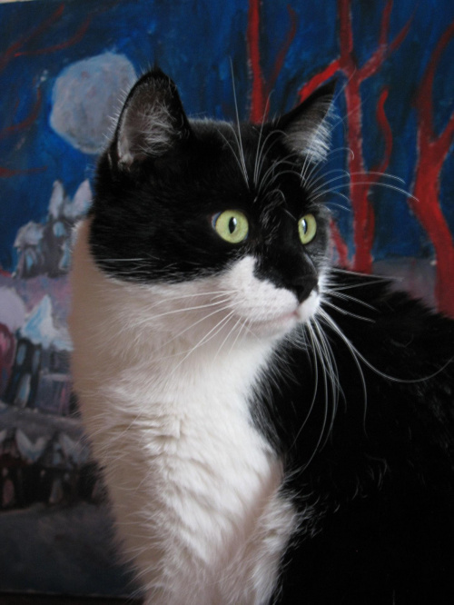 kicik (prezes) na tle mojego obrazu #kicik #kot #koty