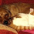 Jak pies z kotem #kot #koty #pies #psy #pupile #jamnik