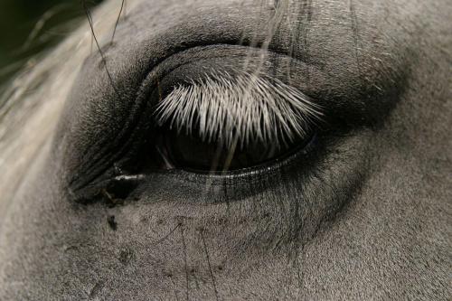 Konie są niezwykle przyjazne, łagodne i chętnie pozują:-) #Słowenia #konie #lipicany