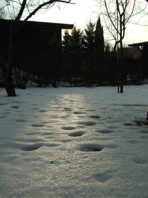Zima zawitała #zima #liść #śnieg