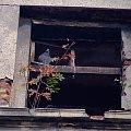 :) tutaj mam wątpliwości co do kategorii zdjęcia... powiedzmy, że przyroda :) #gołąb #okno #bytom #ruina #pustostan