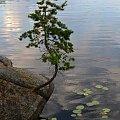 #widok #drzewa #natura