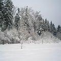 #zima #las #PuszczaBiałowieska