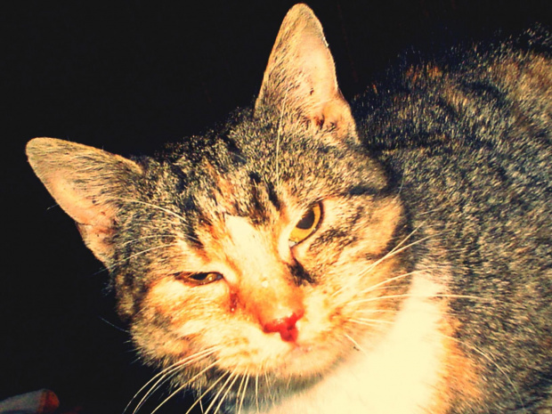 KOTUSIA...:) #działka #kot #wolnożyjące #wolontariat