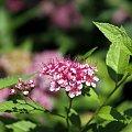 cudownie jest spędzić czas na łące... #łąka #pole #maki #mak #natura #przyroda #owady #makro #kościół #BiałoCzarne #baszta #kwiaty #trawa