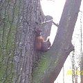 Łazienki Królewskie w Warszawie #Drzewa #Liście #Natura #Pawie #Przyroda #Rośliny #Wiewiórki #Zwierzęta